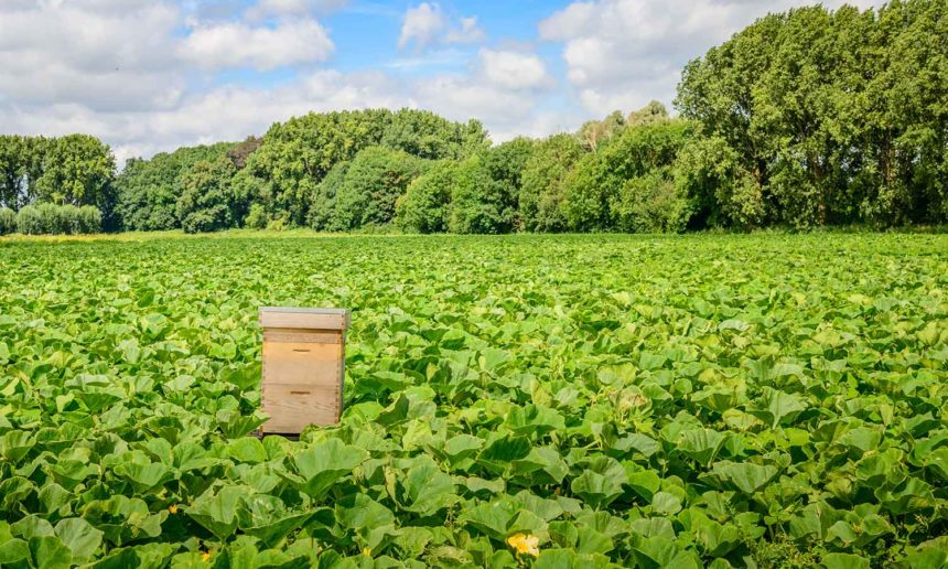 New research shows link between fungicides and bee decline