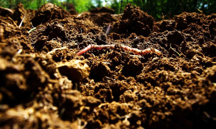 Can Dirt Save the Earth? – The New York Times