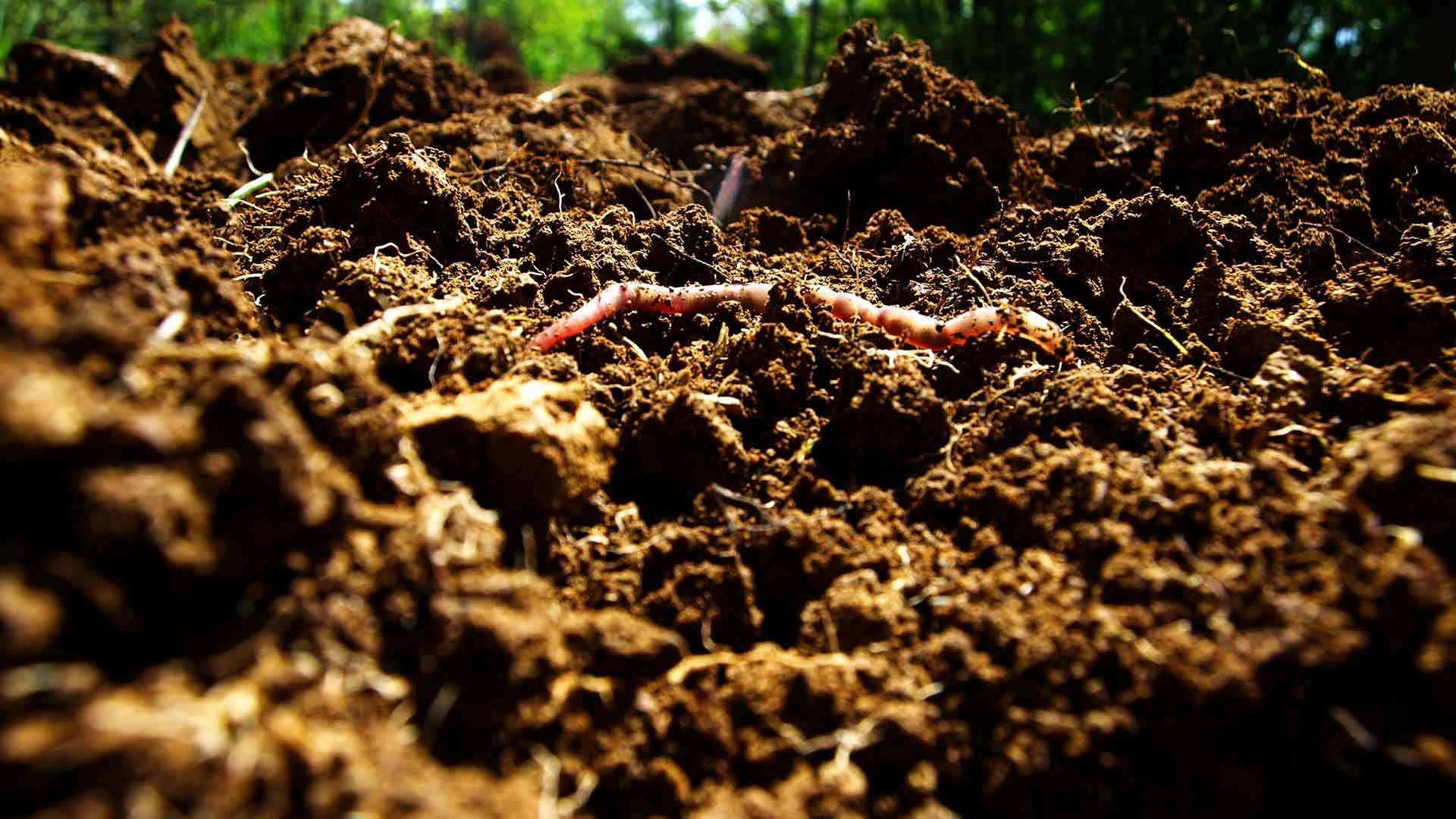 Organic Farming Impacts on Soil, Food and Human Health
