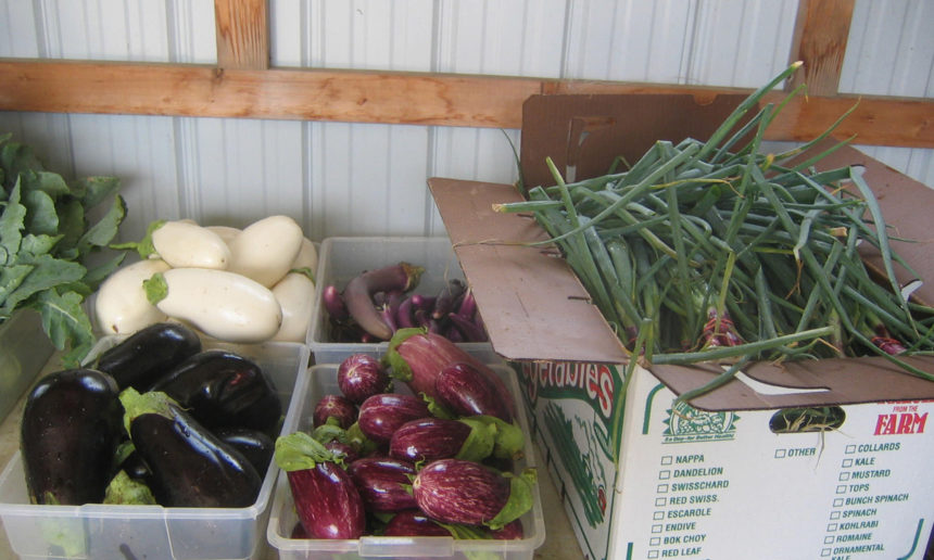 7 Hunterdon County farm markets to visit this summer | Warr | NJ.com