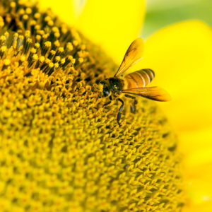 New Proposed Beekeeping Regulations
