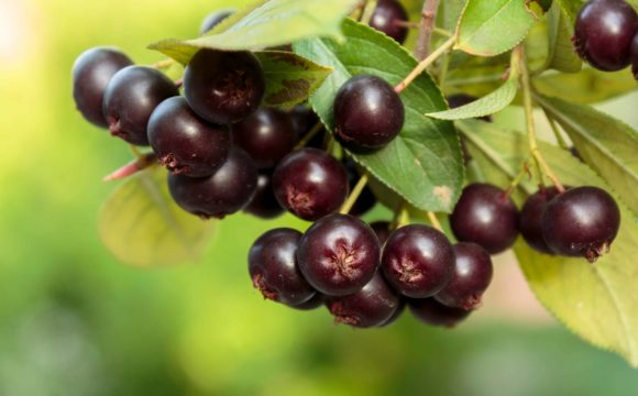 Finding Your Markets for Niche Berry Crops