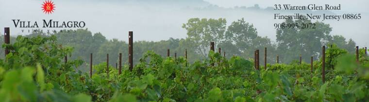 Organic Viticulture and New Jersey's Wine Industry
