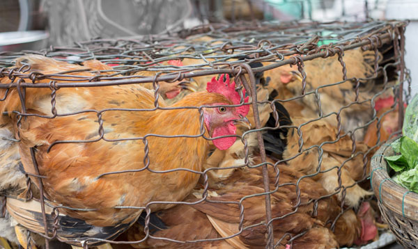 Animal Welfare Panel