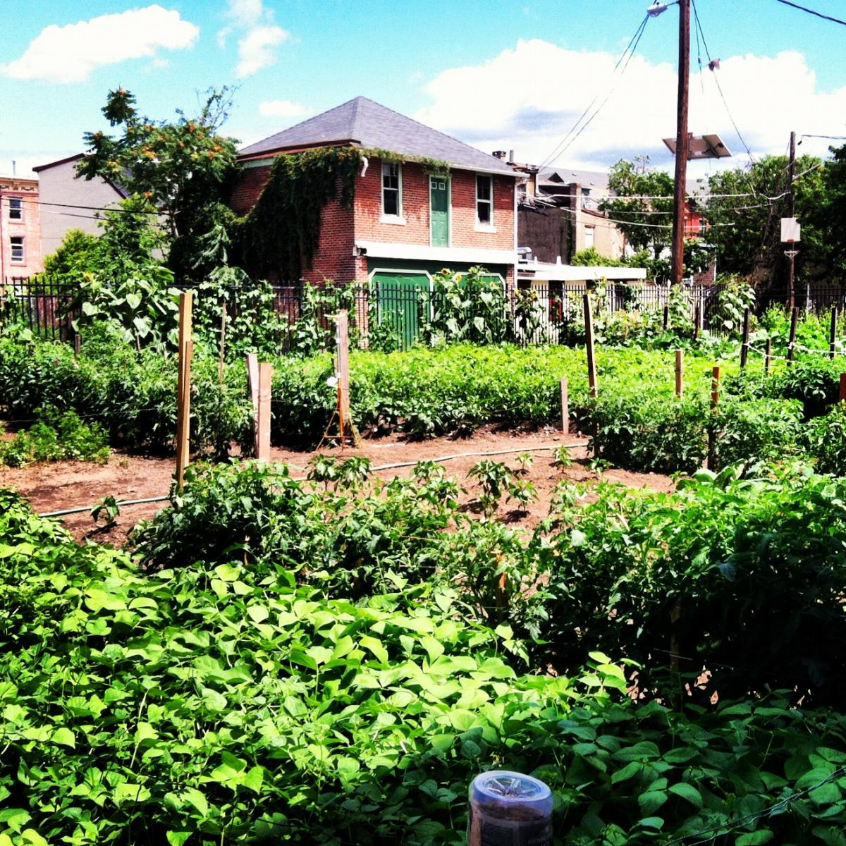 Farming for Nature: Designing Urban Farms and Gardens for Ecosystem Services