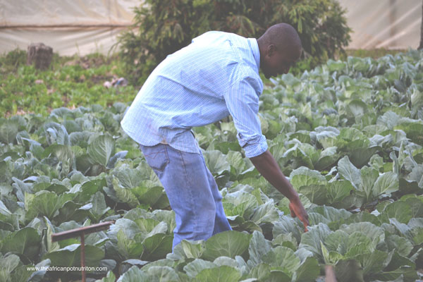 Regulations and Urban Agriculture