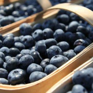 July is blueberry month