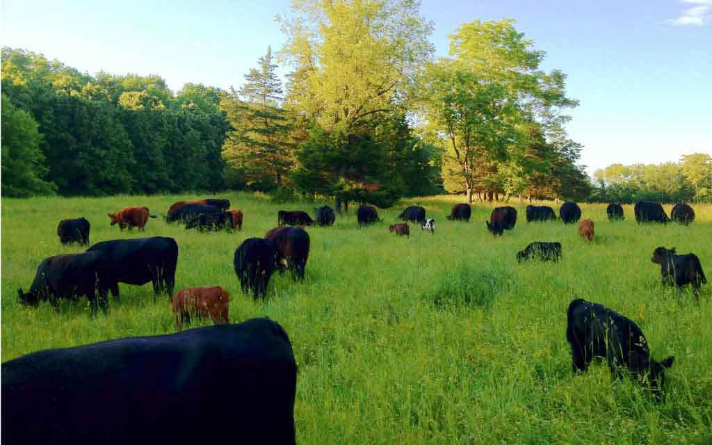 Joel Salatin responds to New York Times' 'Myth of Sustainable Meat' | Grist