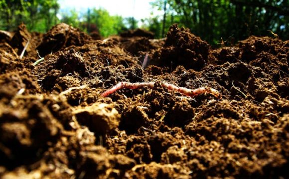 Healthy soils can mitigate climate change