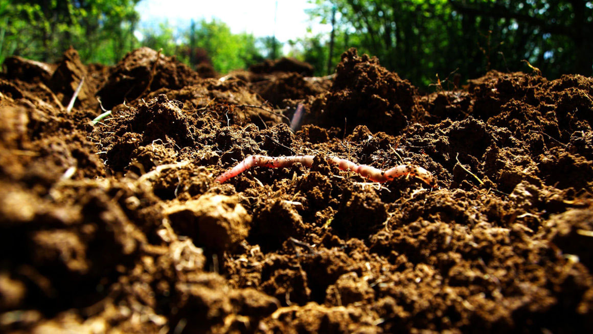 Organizing for Soil Health: A Project of the Northeast Organic Farming Association