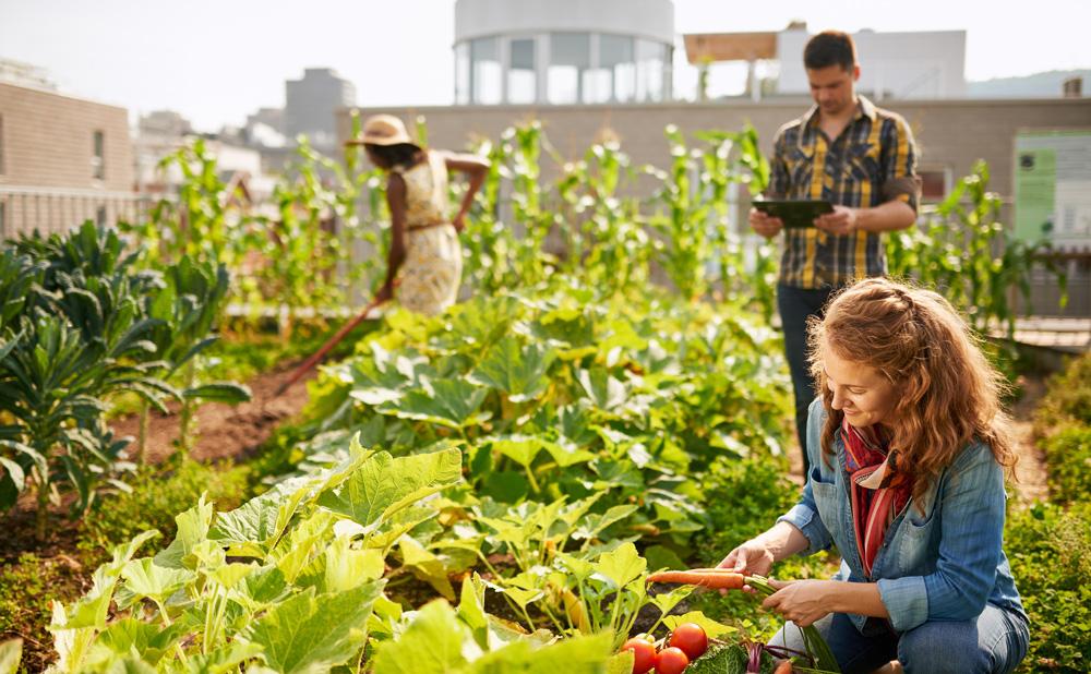 NRCS Small Farm Opportunities