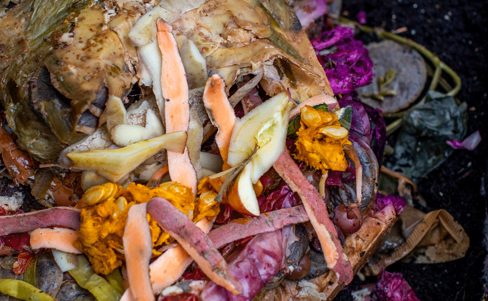 From Fermentation to Fertilizer: Bokashi Composting