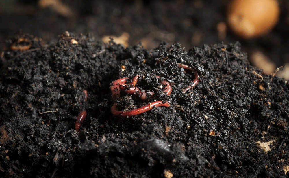 Vermicompost and Beyond