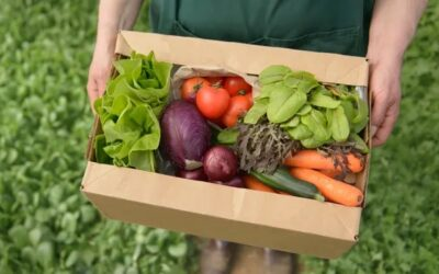 Steep rise in UK's consumption of organic food
