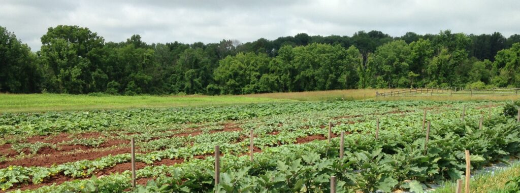 Celebrating 50 years of Organic Farming